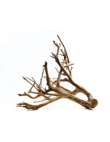 Mangle root Kg - 2103405