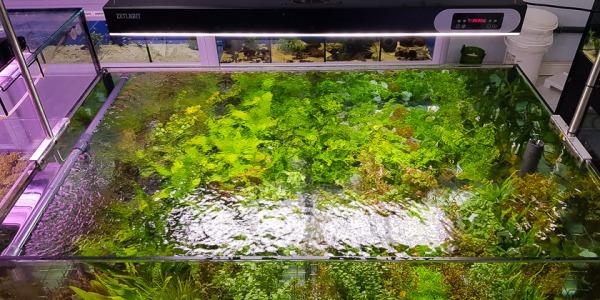 Chegada de Plantas aquaflora