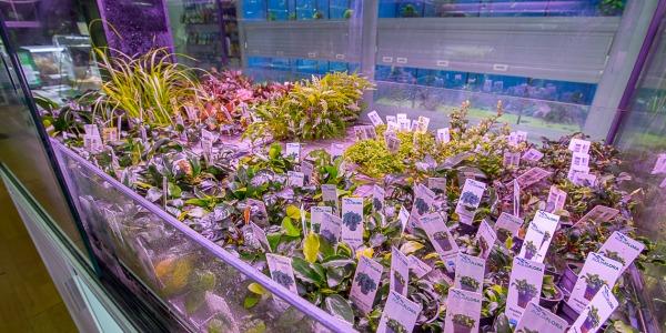 Chegada de Plantas Aquaflora 13/06/2019